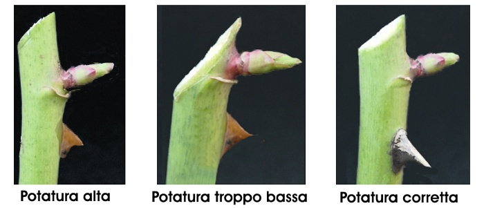 Come Potare Le Piante : Potatura come potare le piante